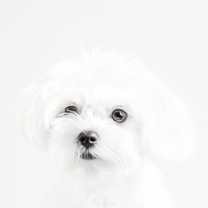 Glamour Pet Photography Vancouver-15