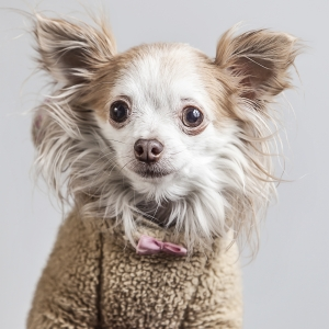 Glamour Pet Photography Vancouver-20