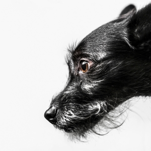 Glamour Pet Photography Vancouver-3