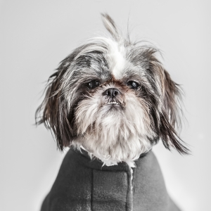 Glamour Pet Photography Vancouver-4