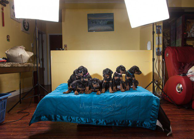 Glamour-pet-photography-Vancouver-behind-the-scenes