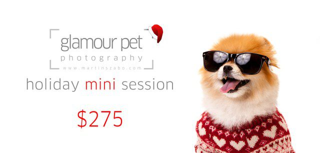 Pet-photography-Vancouver-Holiday-mini-session-2013