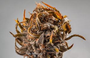 02_Cannabis-Photography-Vancouver-BC-Chads-Emerald-Cookie-002