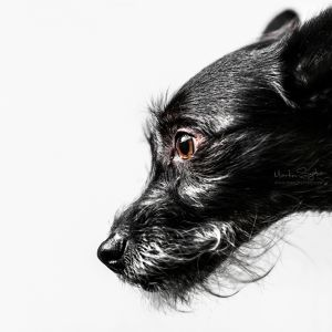 Glamour-Pet-Photography-Vancouver-3